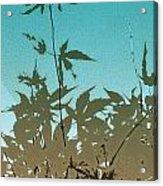Torquoise Haiku Acrylic Print