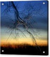 Lightning Branches Acrylic Print