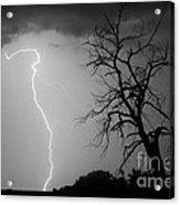 Lightning Tree Silhouette Black And White Acrylic Print