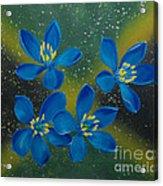 Lignum Vitae Acrylic Print