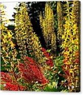 Ligularia And Astilbe Acrylic Print