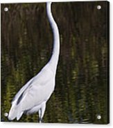 Like A Great Egret Monument Acrylic Print