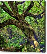 Likin Lichen - Blue Ridge Mountains Acrylic Print
