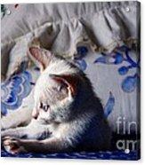 Lil Blue Acrylic Print