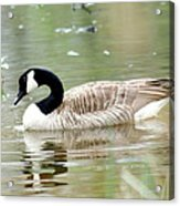 Lila Goose Queen Of The Pond 2 Acrylic Print