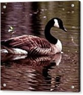Lila Queen Of The Pond Acrylic Print