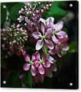 Lilac And Crabapple Acrylic Print