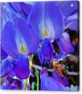 Lilac Blossom And Honey Bee Acrylic Print
