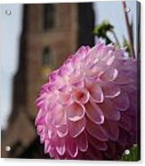 Lilac Dahlia In An English Churchyard Acrylic Print
