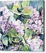 Lilac Delight Acrylic Print