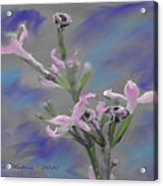 Lilac Dream Acrylic Print