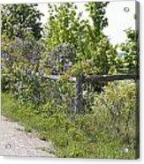 Lilac Fence I Acrylic Print