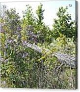 Lilac Fence IIi Acrylic Print
