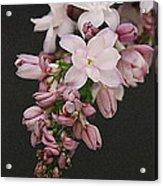 Lilac On Black Acrylic Print