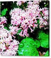 Lilacs After The Rain Acrylic Print