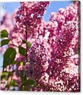 Lilacs Acrylic Print by Elena Elisseeva