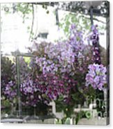 Lilacs Hanging Basket Window Reflection - Dreamy Lilacs Floral Art Acrylic Print