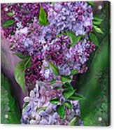 Lilacs In Lilac Vase Acrylic Print