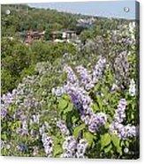 Lilacs On The Hill Acrylic Print