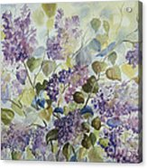 Lilacs Acrylic Print by Paula Marsh
