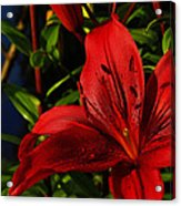 Lilies By The Water Acrylic Print by Randy Hall