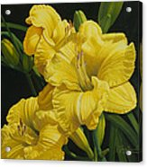 Lilies for Olivia Rose Acrylic Print