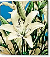 Lilies In White Acrylic Print
