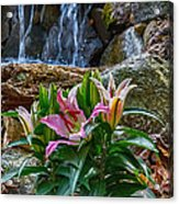 Lilies Of The Falls Acrylic Print