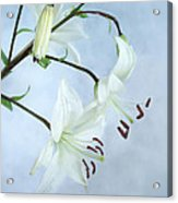 Lilies On Blue Acrylic Print