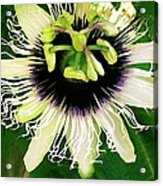 Lilikoi Flower Acrylic Print by James Temple