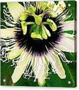 Lilikoi Flower Acrylic Print