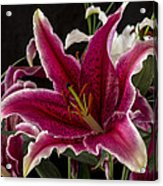 Lilium Acrylic Print