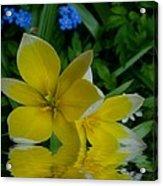 Lilium Of Gold Acrylic Print