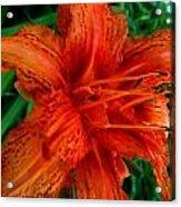 Lillie 4 Acrylic Print