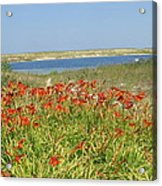 Lillies By The Lake Acrylic Print
