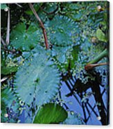Lillies Of The Garden Acrylic Print