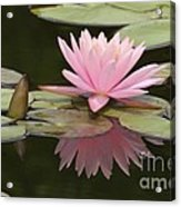 Lilly And Reflective Beauty Acrylic Print