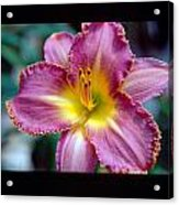 Lilly Blooming Vertical Acrylic Print