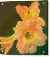Lilly Enhanced Acrylic Print