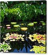 Lilly Garden Acrylic Print