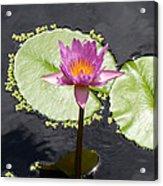 Lilly Lake Acrylic Print