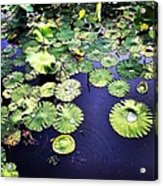 Lilly Pad Acrylic Print by Joan Meyland