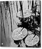 Lilly Pad Pond Black And White Acrylic Print