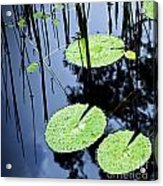 Lilly Pad Pond Acrylic Print