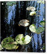 Lilly Pad Reflection Acrylic Print