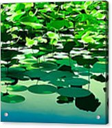 Lilly Pads Of Reelfoot Lake Acrylic Print