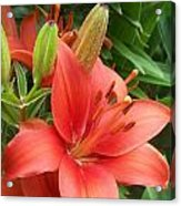 Lillys And Buds 1 Acrylic Print