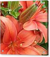 Lillys And Buds 3 Acrylic Print