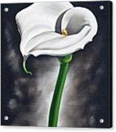 Lily 2 Acrylic Print