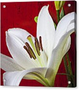Lily Against Red Wall Acrylic Print by Garry Gay
